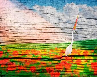 Sunbeam Stroll - a photo composite