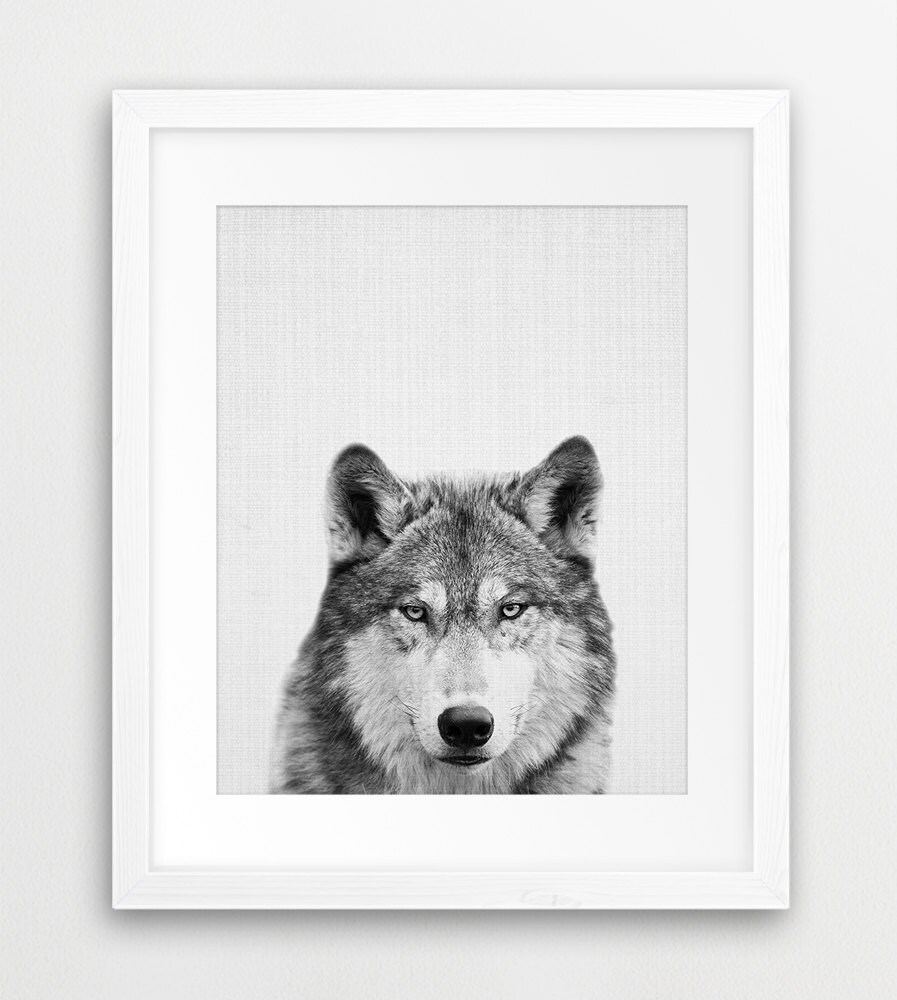 Wolf print grey wolf print black and white photography woodland animals nursery decor digital print wolf photo wild animal kids art