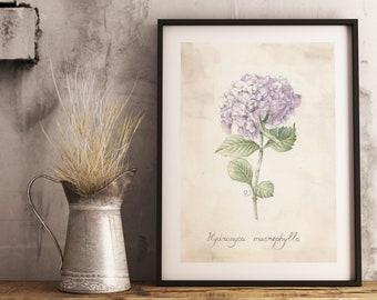 "Original watercolor painting  ""Hydrangea"", Watercolor hydrangea, hydrangea flower print, Vntage hydrangea print, Antique hydrangea wall art"