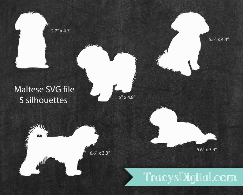 Maltese Puppies  SVG file HTV Adhesive vinyl vector files image 0