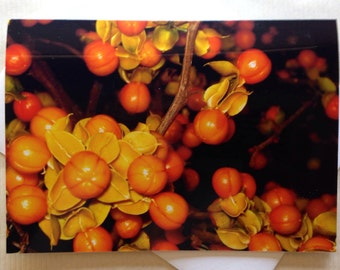 Thanksgiving Greeting Cards - Fall Cards - Fall Florals - Holiday Cards - Bittersweet