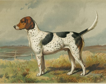 "Foxhound Art Print, 134 Year Old Lithograph - Cassell's ""Illustrated Book of the Dog"""