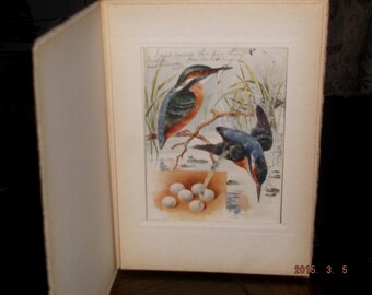 """Vintage 1908 """"The Kingfisher"""" postcard in frame by Raphael Tuck & Sons"""