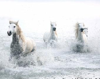 Horse Art Photography - White Horse Dreams, Wild Horses, White Horse Decor, Nature Art, Horse Family, Camargue Horses, Pastel Horses, Equine