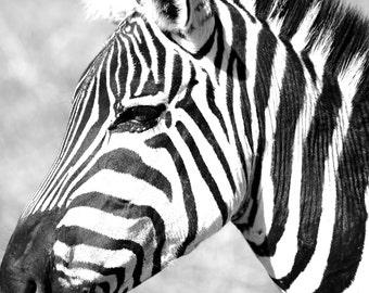 Zebra Profile - Digital Photography - Zebra Art, Zebra Photography, Zebra Safari Art, Zebra Stripes, Zebra Room Decor, Zebra Wall Art