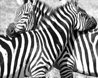 Zebra Hug - Zebra Photography, Zebra Art, Black & White Photography, Zebra Decor, Digital Photography, Animal Love, Zebra Print, Safari Art