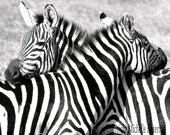 Zebra Hug - Zebra Photography, Black and White Photography, Zebra Decor, Safari Art, Animal Love,  Zebra Love, Zebra Photo, Zebra Art