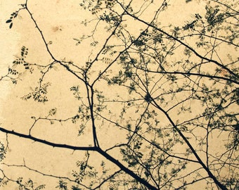 Branches of trees-Etude-photographic printing. Elaborate digital photography