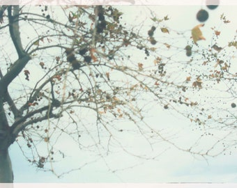 Tree branches with berries-photographic print-digital photography-Sicily, Italy