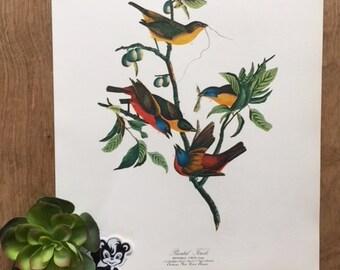 b32ad5ff3c3 Painted finch print