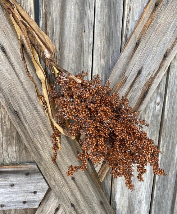 Wild Dried Millet Brown Spray ~ 1 Stems