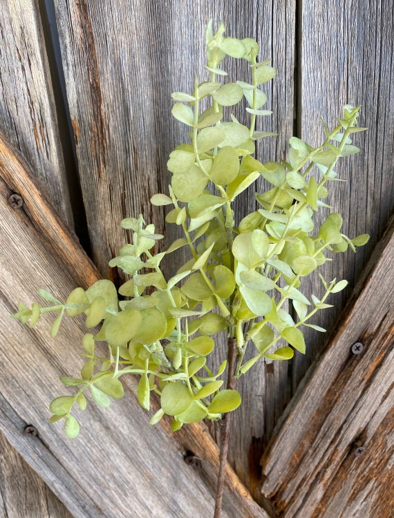 Green Eucalyptus Bundle