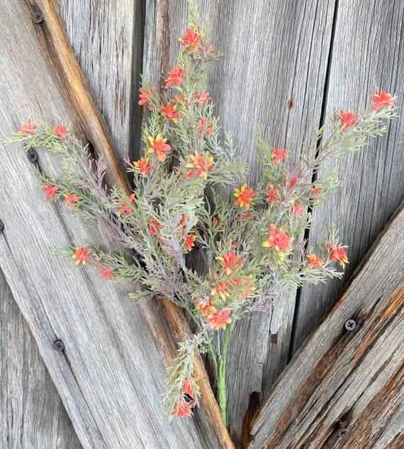 Orange Heather Bush, Wreath Supply