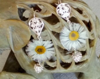 Pendant earrings with dried and laminated real daisy