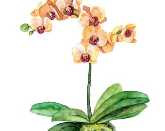 """Potted Orchid Painting - Print titled, """"Orange Orchid"""",Orchid Painting, Orchid Print, Botanical, Potted Plant, Orchid Plant, Flower Painting"""