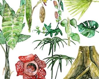 "Tropical Plants Painting - Print from Original Watercolor Painting, ""Tropical Plant Specimens"", Jungle, Tropical, Rainforest, Foliage"