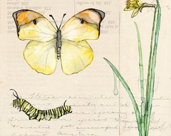 "Botanical Painting - Print Titled ""Nature Collection, Field"" Botanical Print, Watercolor Painting, Watercolor Print, Botanical Art,Butterfly"