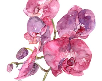 """Pink Orchid Print - Painting titled, """"SC Orchid"""", Watercolor Flowers, Watercolor Print, Orchid Plant, Orchid Painting, Orchid Art,Home Decor"""