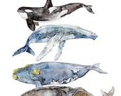 "Whale Species, Whale Painting, Watercolor Painting, Whale Art, Nautical Art, Beach Decor, Orca, Whale Nursery, Print titled, ""Whale Species"""