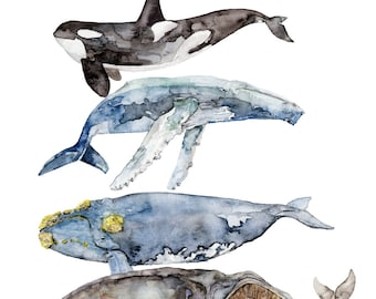 """Whale Species, Whale Painting, Watercolor Painting, Whale Art, Nautical Art, Beach Decor, Orca, Whale Nursery, Print titled, """"Whale Species"""""""