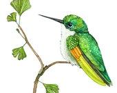 "Hummingbird Painting, Watercolor Painting, Hummingbird Art, Hummingbird Print, Bird, Bird Prints, Garden, Print titled, ""Green Hummingbird"""