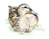 "Duck Painting - Print from Original Watercolor Painting, ""Mallard Duck"", Animal Art, Wildlife, Duck Print"