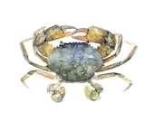 "Blue Crab Painting- Print from Original Watercolor Painting, ""Blue Crab"", Beach Decor, Seashore, Crab, Maryland Crab, Crab Decor"