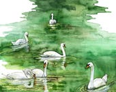 "Watercolor Painting, Swan Painting, Swan Print, Watercolor Print, Painting, Watercolor Painting, Swan, Pond, Art, Print titled, ""Swan Lake"""
