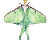 "Luna Moth Print - Painting titled, ""Luna Moth"", Green Luna Moth, Watercolor Print, Insect Art, Insect Print, Luna Moth Wings, Moth Painting"