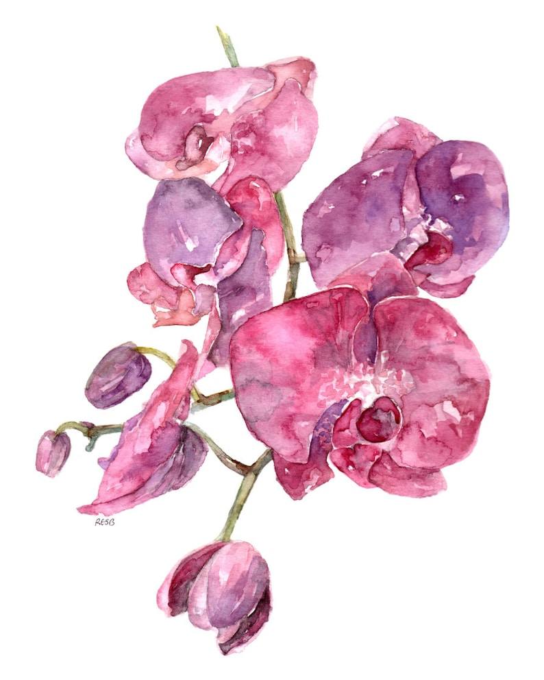 Pink Orchid Print  Painting titled SC Orchid image 0