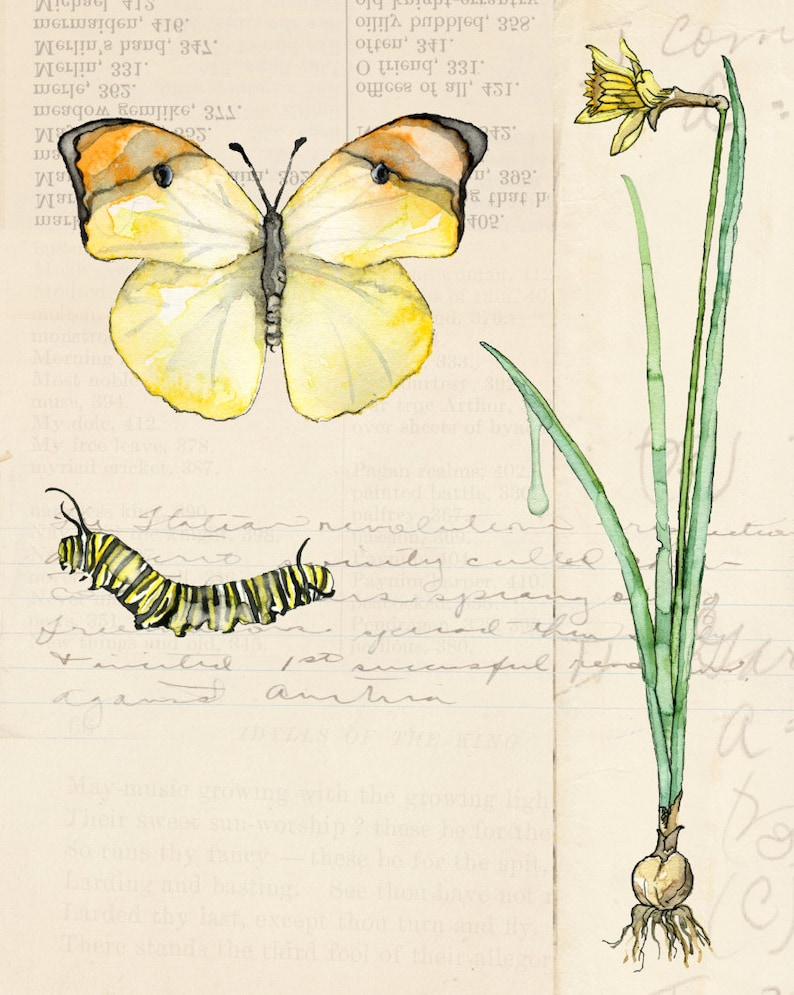 Botanical Painting  Print Titled Nature Collection image 0
