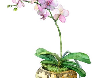 """Potted Orchid Painting - Print titled, """"Pink Orchid"""", Orchid Painting, Orchid Print, Botanical, Potted Plant, Orchid Plant, Flower Painting"""