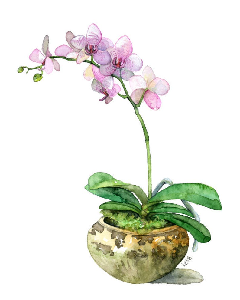 Potted Orchid Painting  Print titled Pink image 0