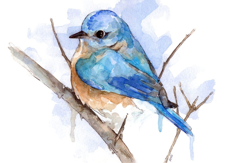 Bluebird Painting  Print from Original Watercolor Painting image 0