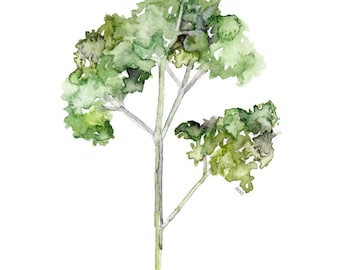 """Parsley Herb Painting - Print from Original Watercolor Painting, """"Parsley"""", Kitchen Decor, Green Herb, Botanical"""