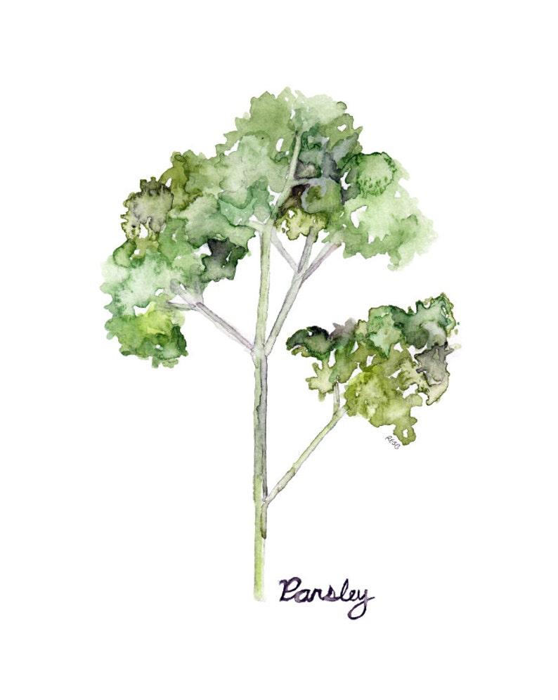 Parsley Herb Painting  Print from Original Watercolor image 0