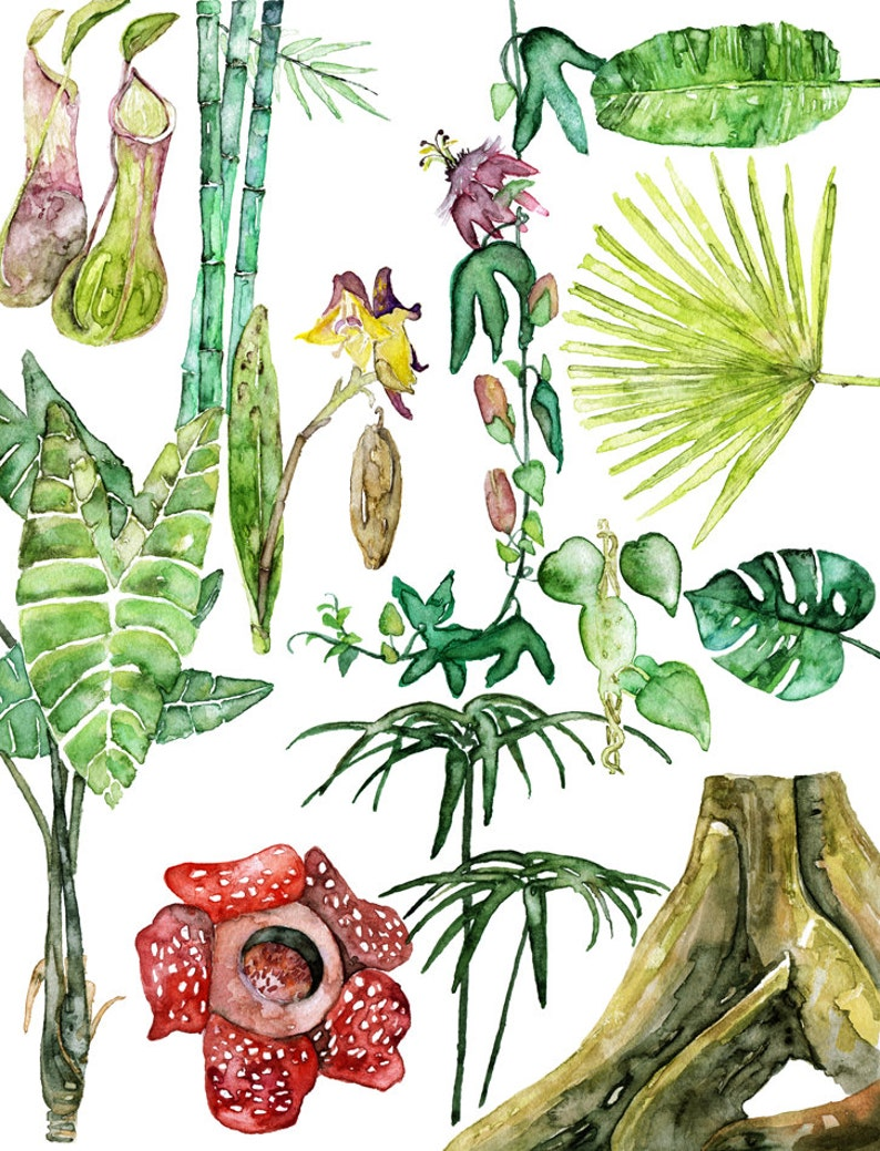 Tropical Plants Painting  Print from Original Watercolor image 0