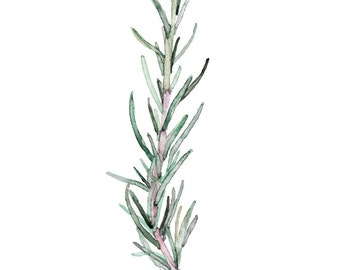"""Rosemary Herb Painting - Print from my Original Watercolor Painting, """"Rosemary"""", Kitchen Decor, Green Herb, Botanical"""