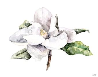 "Magnolia Painting, Watercolor Flower, Watercolor Painting, White Magnolia, Botanical Print, Flower Print, Flower, Print titled, ""Magnolia 4"""
