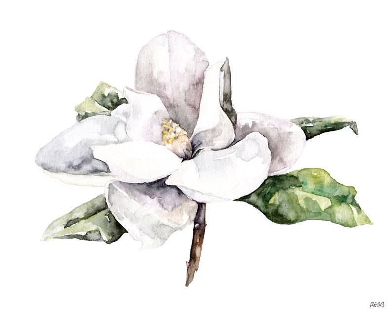 Magnolia Painting Watercolor Flower Watercolor Painting image 0