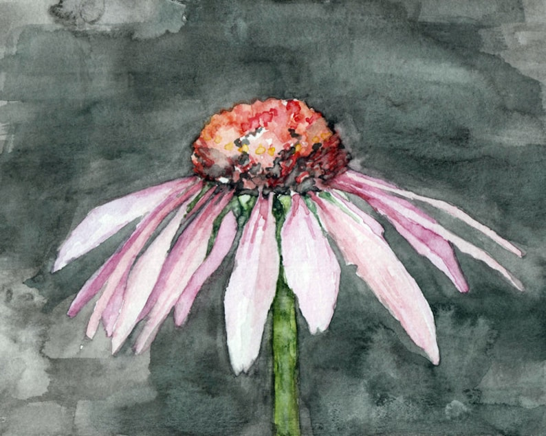 Coneflower Painting  Print from Original Watercolor Painting image 0