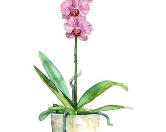 """Watercolor Orchid Painting - Print titled, """"Fuchsia Orchid"""",Orchid Painting, Orchid Print, Botanical, Watercolor Flowers,Watercolor Painting"""
