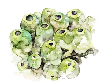 "Sea Sponge Painting - Print from Original Watercolor Painting, ""Green Sea Sponge"", Ocean Art, Green Seaweed, Under the Sea"