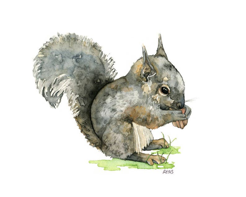 Watercolor Baby Squirrel Painting  Print titled Baby image 0