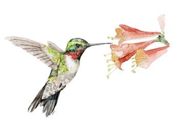 "Hummingbird Painting - Print from Original Watercolor Painting, ""Flit"", Hummingbird, Emerald Green, Spring"