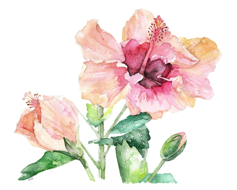 Hibiscus Painting  Print from Original Watercolor Painting image 0