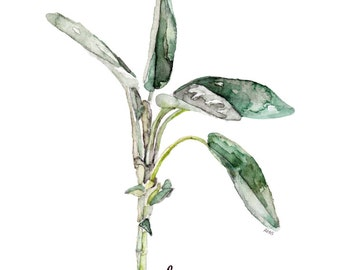 "Sage Herb Painting - Print from Original Watercolor Painting, ""Sage"", Kitchen Decor, Green Herb, Botanical"