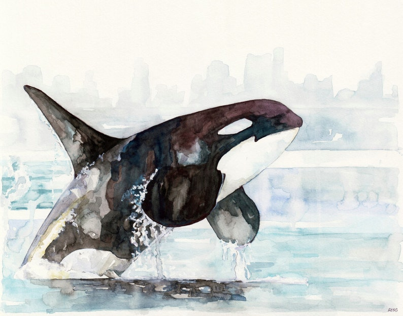 Orca Painting  Print from Original Watercolor Painting image 0
