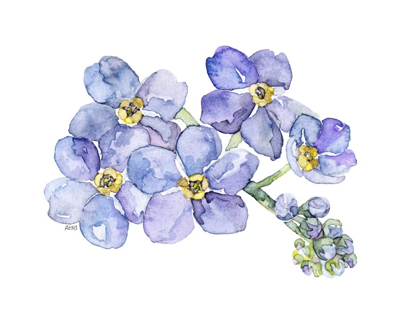 Forget Me Not Painting  Print from my Original Watercolor image 0