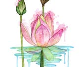 Watercolor Painting, Lotu...